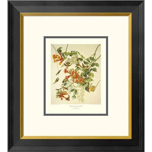 Global Gallery Ruby Throated Hummingbird By John James Audubon, 20 X 18-Inch Wall Art With Decorative Border