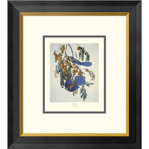 Global Gallery Florida Jay By John James Audubon, 20 X 18-Inch Wall Art With Decorative Border