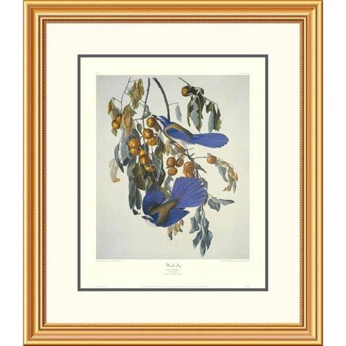 Global Gallery Florida Jay By John James Audubon, 30 X 26-Inch Wall Art With Decorative Border