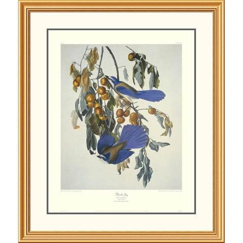Global Gallery Florida Jay By John James Audubon, 40 X 34-Inch Wall Art With Decorative Border