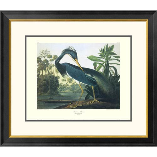 Global Gallery Louisiana Heron By John James Audubon, 26 X 30-Inch Wall Art With Decorative Border