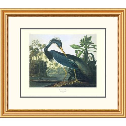 Global Gallery Louisiana Heron By John James Audubon, 26 X 30-Inch Wall Art With Decorative Border