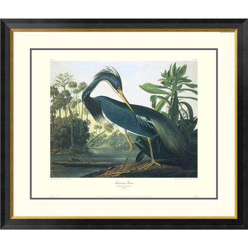 Global Gallery Louisiana Heron By John James Audubon, 34 X 40-Inch Wall Art With Decorative Border
