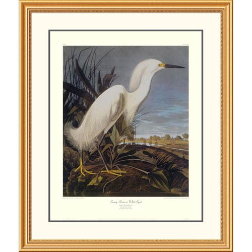 Global Gallery Snowy Heron Or White Egret By John James Audubon, 40 X 34-Inch Wall Art With Decorative Border
