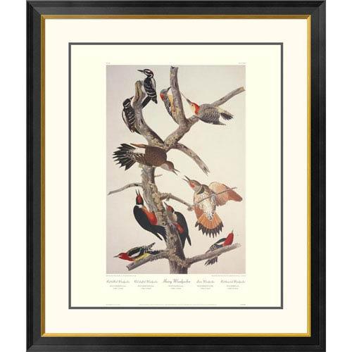 Global Gallery Hairy Woodpecker By John James Audubon, 40 X 34-Inch Wall Art With Decorative Border