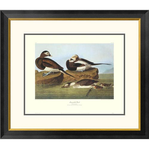 Global Gallery Long Tailed Duck By John James Audubon, 26 X 30-Inch Wall Art With Decorative Border