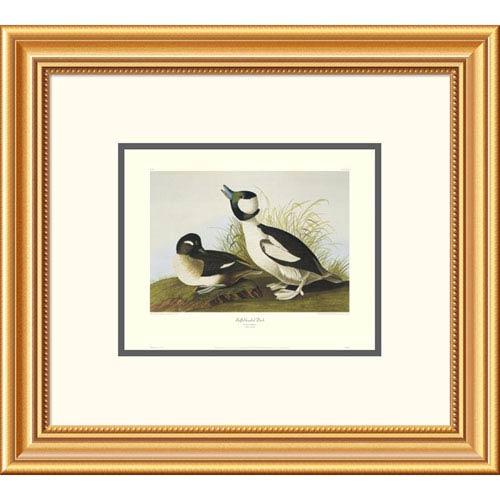 Global Gallery Buffel Headed Duck By John James Audubon, 18 X 20-Inch Wall Art With Decorative Border