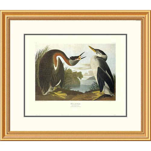 Global Gallery Red Necked Grebe By John James Audubon, 26 X 30-Inch Wall Art With Decorative Border