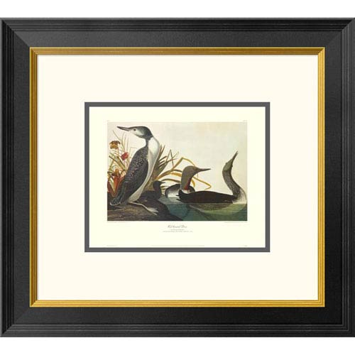 Global Gallery Red Throated Diver By John James Audubon, 18 X 20-Inch Wall Art With Decorative Border