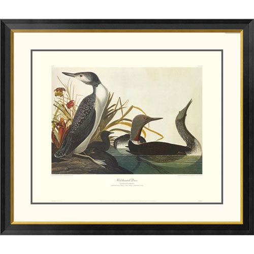 Global Gallery Red Throated Diver By John James Audubon, 40 X 34-Inch Wall Art With Decorative Border