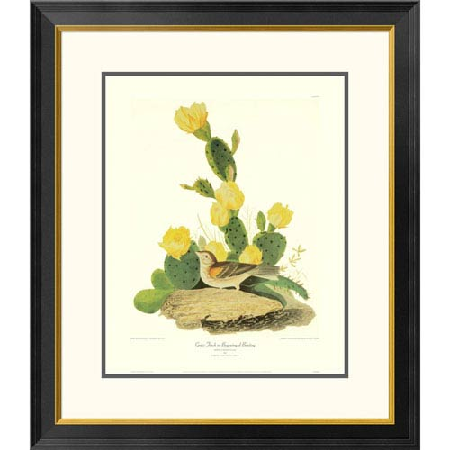 Global Gallery Grass Finch Or Bay Winged Bunting By John James Audubon, 30 X 26-Inch Wall Art With Decorative Border