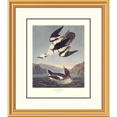 Global Gallery Smew Or White Nun By John James Audubon, 30 X 26-Inch Wall Art With Decorative Border