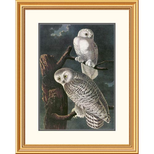 Global Gallery Snowy Owl By John James Audubon, 32 X 25-Inch Wall Art