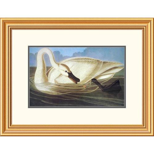 Global Gallery Trumpeter Swan By John James Audubon, 20 X 26-Inch Wall Art
