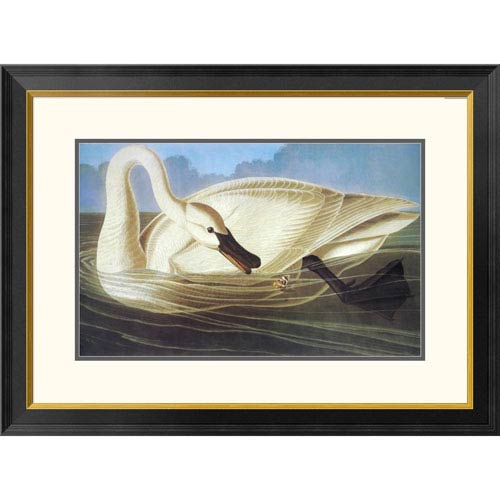 Global Gallery Trumpeter Swan By John James Audubon, 23 X 32-Inch Wall Art
