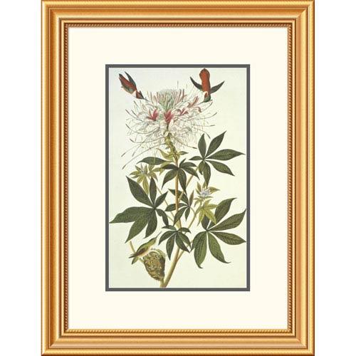 Global Gallery Ruff Necked Hummingbird By John James Audubon, 26 X 20-Inch Wall Art