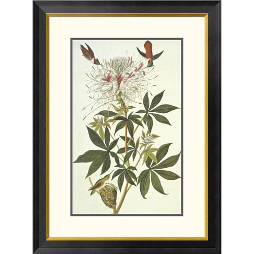 Ruff Necked Hummingbird By John James Audubon, 32 X 23-Inch Wall Art