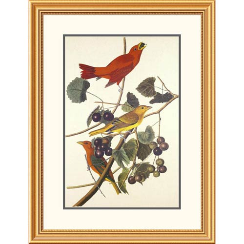 Global Gallery Summer Red Bird By John James Audubon, 34 X 26-Inch Wall Art