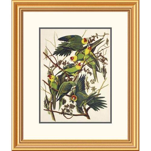 Global Gallery Carolina Parrot By John James Audubon, 26 X 22-Inch Wall Art