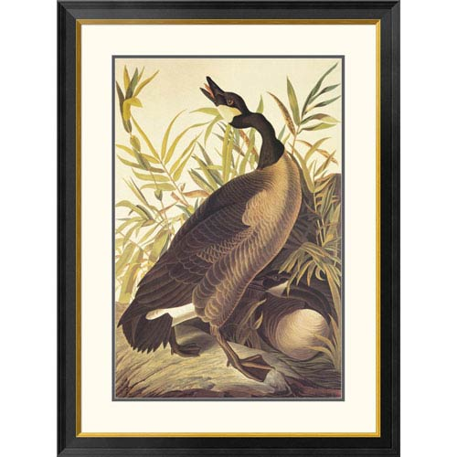 Global Gallery Canada Goose By John James Audubon, 40 X 30-Inch Wall Art