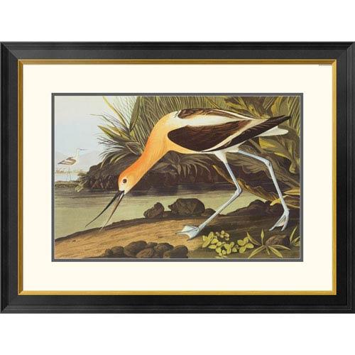 Global Gallery American Avocet By John James Audubon, 26 X 34-Inch Wall Art