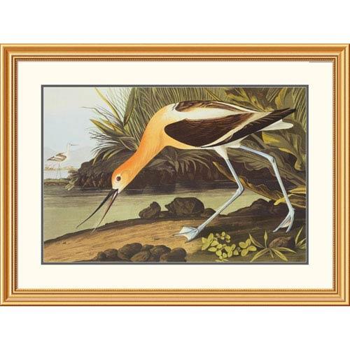 Global Gallery American Avocet By John James Audubon, 30 X 40-Inch Wall Art