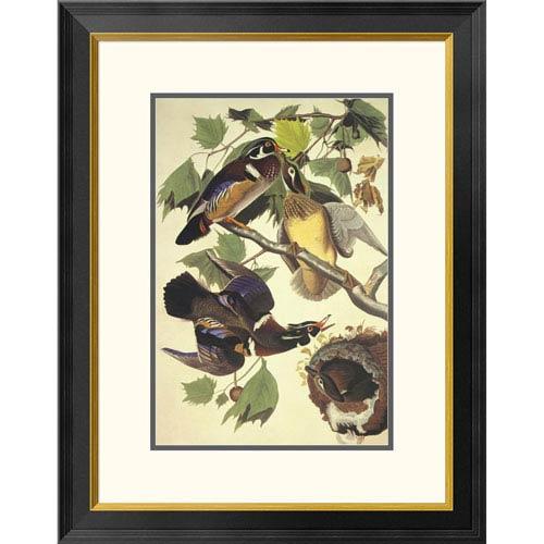 Global Gallery Summer Or Wood Duck By John James Audubon, 28 X 22-Inch Wall Art