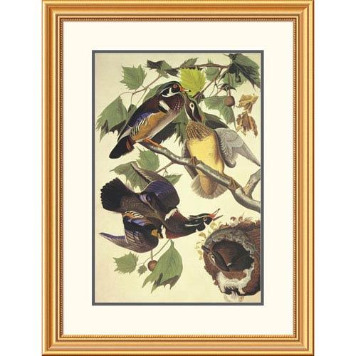 Global Gallery Summer Or Wood Duck By John James Audubon, 34 X 26-Inch Wall Art