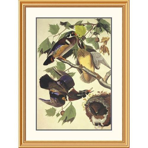 Global Gallery Summer Or Wood Duck By John James Audubon, 40 X 30-Inch Wall Art