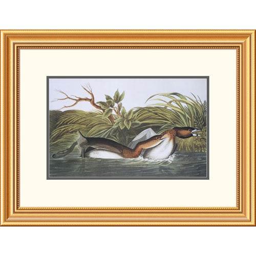 Global Gallery American Pied Bill Dobchick By John James Audubon, 20 X 26-Inch Wall Art