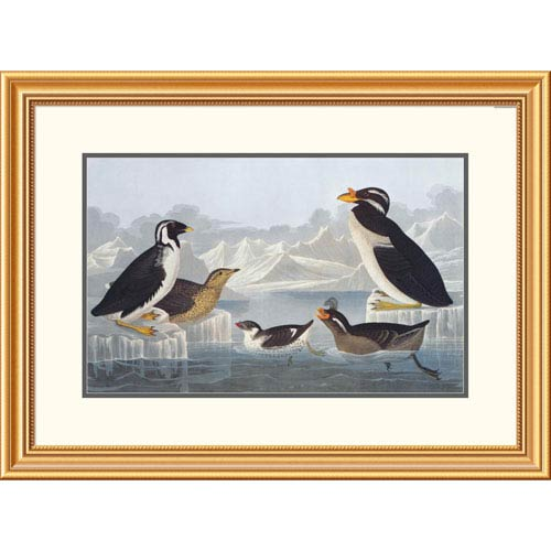 Global Gallery Black Throated Guillemot And Nobbed Billed Auk By John James Audubon, 23 X 32-Inch Wall Art