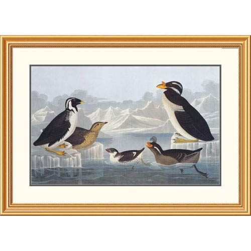 Global Gallery Black Throated Guillemot And Nobbed Billed Auk By John James Audubon, 28 X 40-Inch Wall Art