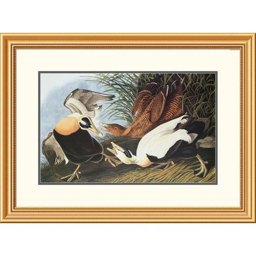 Global Gallery Eider Duck By John James Audubon, 23 X 32-Inch Wall Art