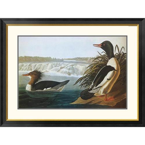 Global Gallery Goosander By John James Audubon, 30 X 40-Inch Wall Art