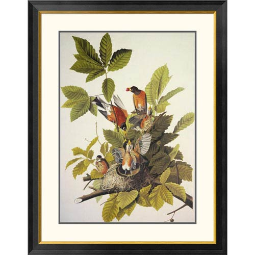 Global Gallery American Robin By John James Audubon, 40 X 31-Inch Wall Art