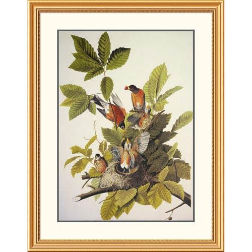 Global Gallery American Robin By John James Audubon, 40 X 31-Inch Wall Art