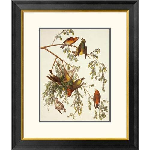 Global Gallery American Crossbill By John James Audubon, 26 X 22-Inch Wall Art