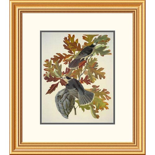 Global Gallery Canada Jay By John James Audubon, 24 X 21-Inch Wall Art