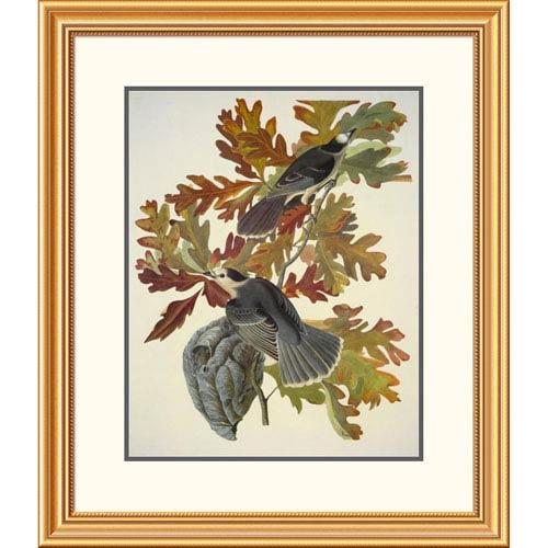 Global Gallery Canada Jay By John James Audubon, 30 X 26-Inch Wall Art
