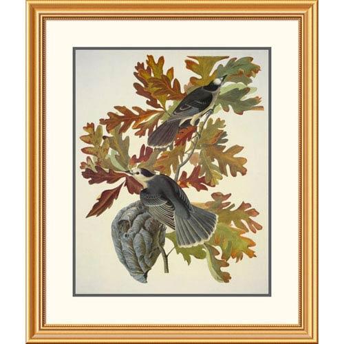 Global Gallery Canada Jay By John James Audubon, 34 X 30-Inch Wall Art
