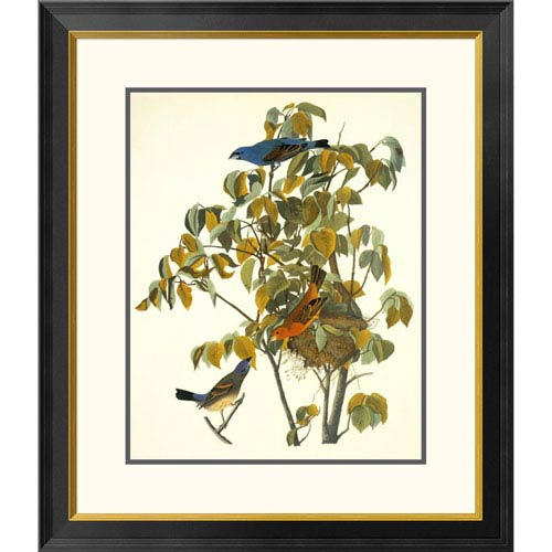 Global Gallery Blue Grosbeak By John James Audubon, 30 X 26-Inch Wall Art