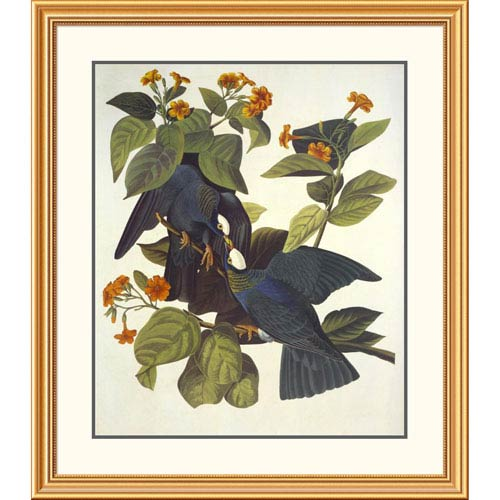 Global Gallery White Crowned Pigeon By John James Audubon, 40 X 34-Inch Wall Art