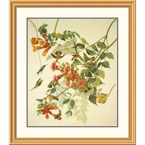 Global Gallery Ruby Throated Hummingbird By John James Audubon, 40 X 34-Inch Wall Art