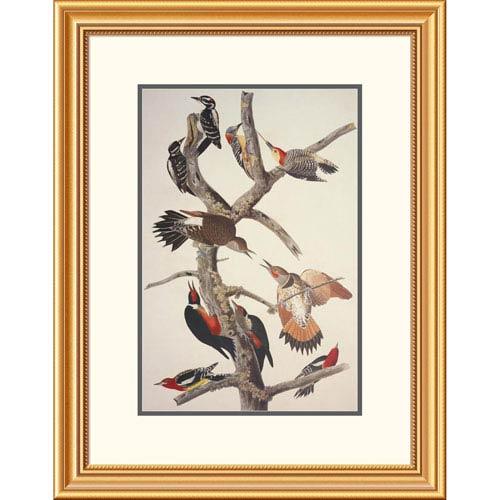 Global Gallery Hairy Woodpecker By John James Audubon, 28 X 22-Inch Wall Art