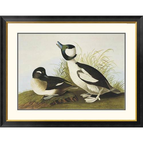 Global Gallery Buffel Headed Duck By John James Audubon, 31 X 40-Inch Wall Art