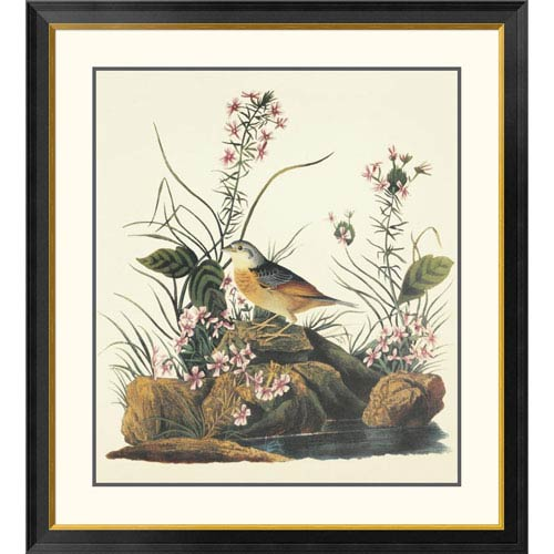 Global Gallery Yellow Winged Sparrow By John James Audubon, 40 X 36-Inch Wall Art