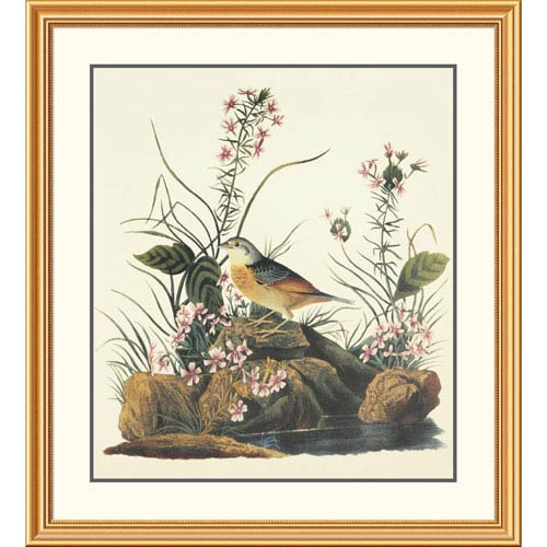 Global Gallery Yellow Winged Sparrow By John James Audubon, 40 X 36-Inch Wall Art