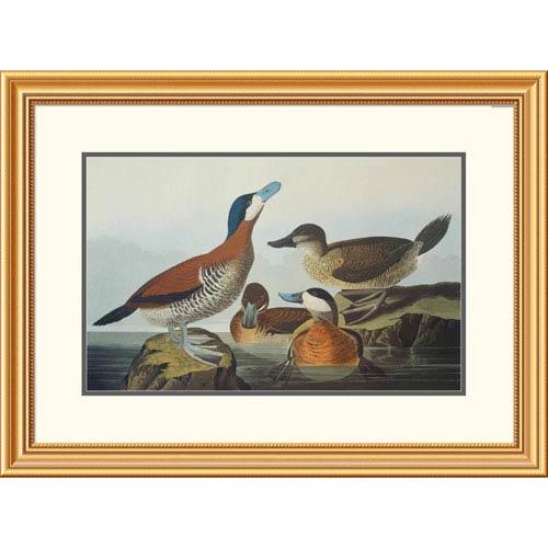 Global Gallery Ruddy Duck By John James Audubon, 23 X 32-Inch Wall Art