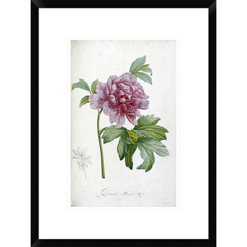 Global Gallery Engraving Of A Peony By Pierre Joseph Redoute, 22 X 16-Inch Wall Art