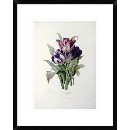 Global Gallery Tulips By Pierre Joseph Redoute, 22 X 17-Inch Wall Art